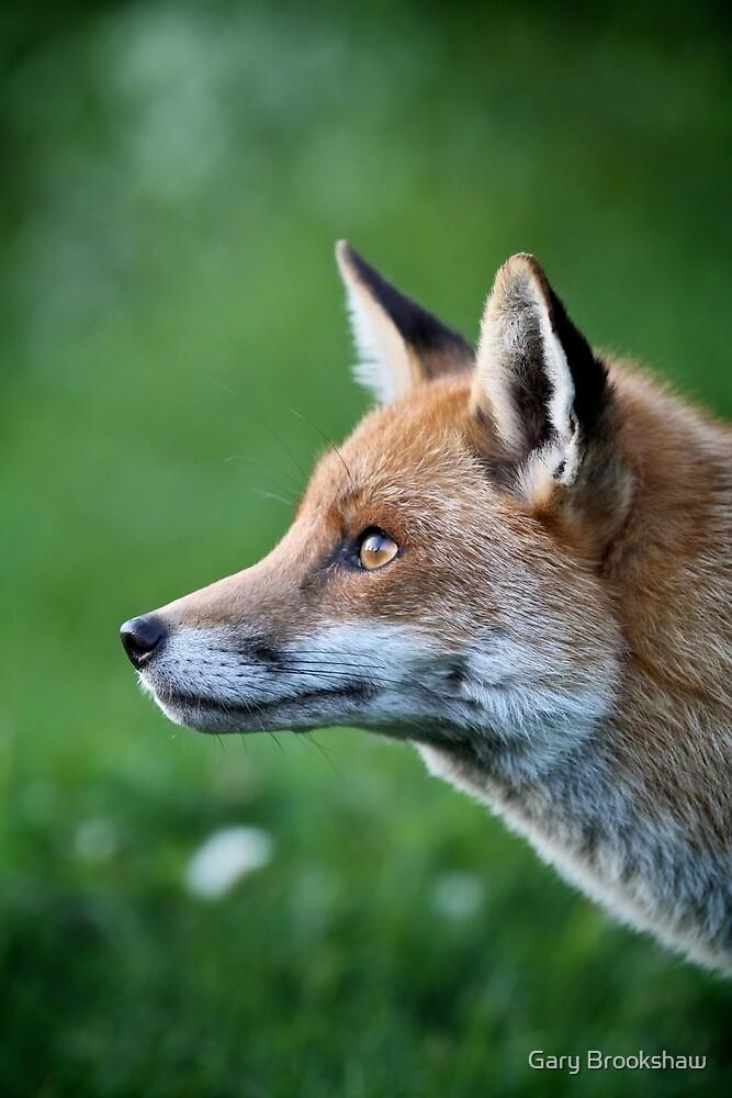 Red Fox by Gary Brookshaw