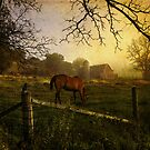 Rural State of Mind - Morning Light by Laura Palazzolo