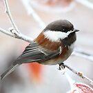 Kastanie unterstützte Chickadee im Winter von Peggy Collins