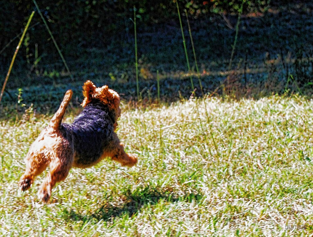 Tucker the Flying Terrier by barnsis