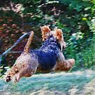 Tucker runing Flat Out by barnsis