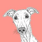 Whippet Dog Portrait ( coral background ) by Adam Regester