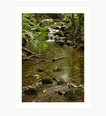 Mossman Gorge Art Print