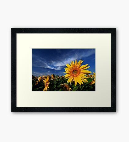 A touch of white Framed Print