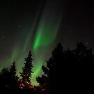 Aurora Curves by Roxanne Persson