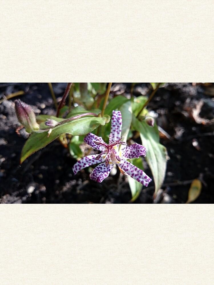 Kröten-Orchidee von Gourmetkater