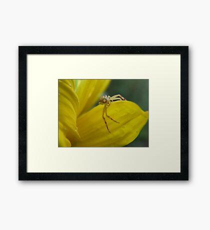 Spider World Framed Print