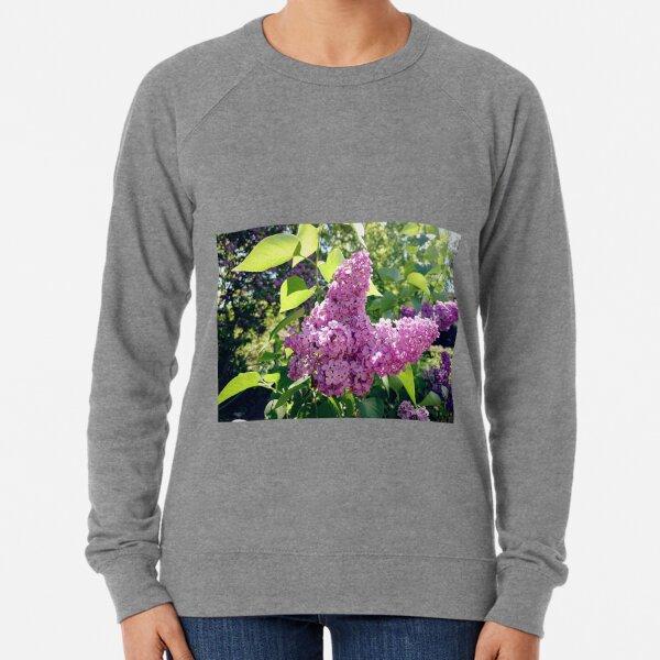Lilacs bloom Lightweight Sweatshirt