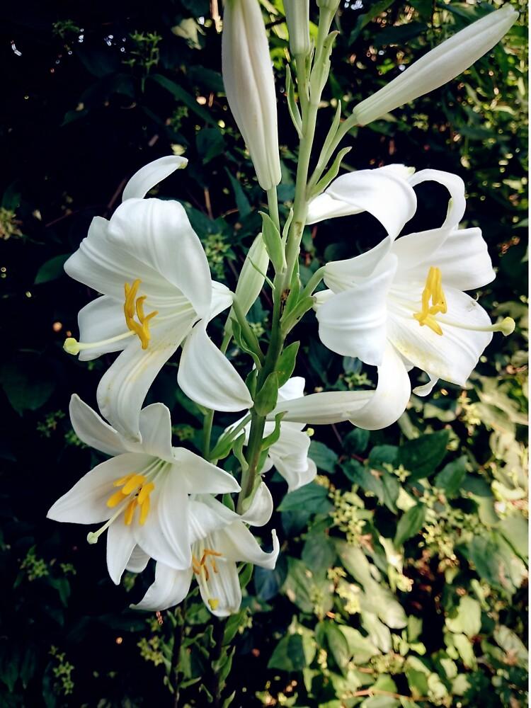 Weiße Lilie von Gourmetkater