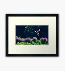 Osprey fishing Framed Print