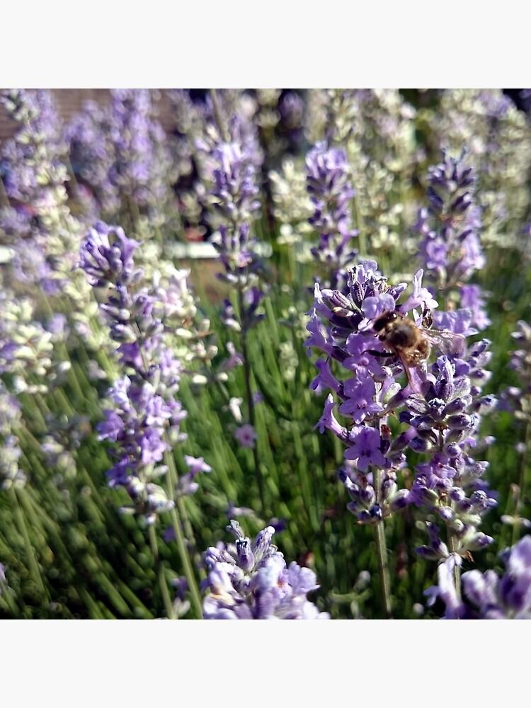 Lavendel von Gourmetkater