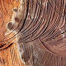 Wood in Abstract by Alixzandra
