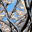 tree with snow by andytechie