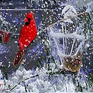 Snowstorm by Seth  Weaver