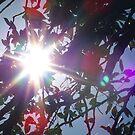 Sunshine by Sunil Bhardwaj