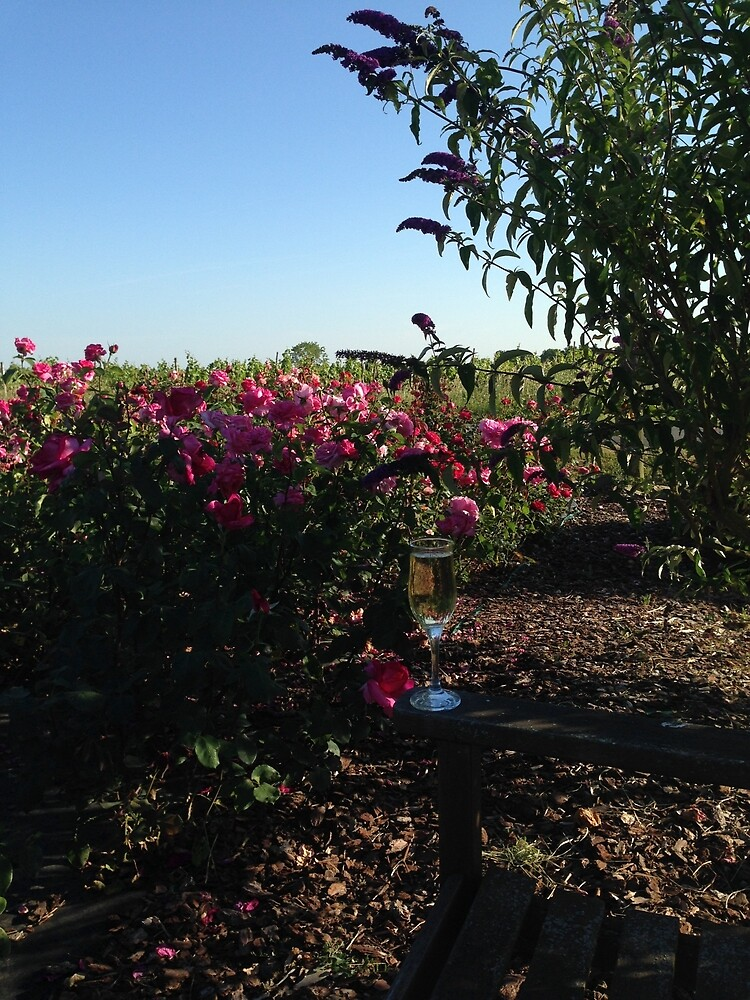 Champagne in the Roses by Eve Denby