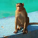 Monkey at pool  by Sunil Bhardwaj
