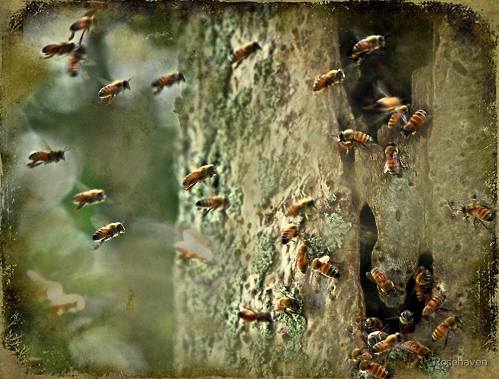 """""""Killer Bees ,that what Got 'im ...."""" by Rosehaven"""