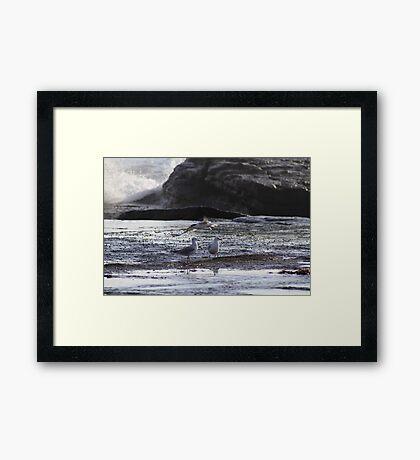 My Tern To Fly Framed Print