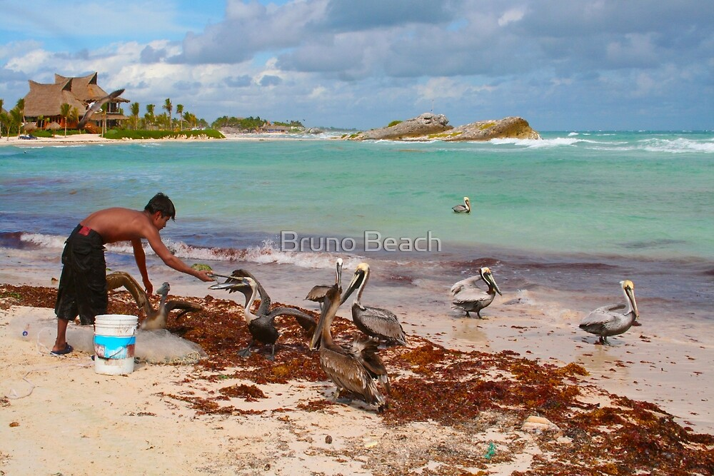 Guy feeding pelicans in Tulum Beach, MEXICO by Bruno Beach