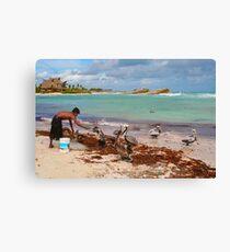 Guy feeding pelicans in Tulum Beach, MEXICO Canvas Print