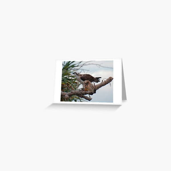 SC ~ WO ~ RAPTOR ~ Eastern Osprey by David Irwin 131019 Greeting Card