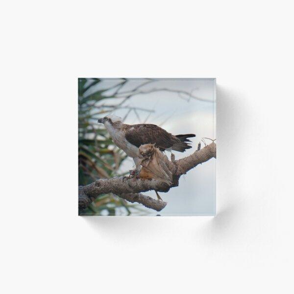 SC ~ WO ~ RAPTOR ~ Eastern Osprey by David Irwin 131019 Acrylic Block