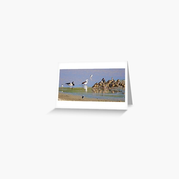 NT ~ WATERFOWL ~ Magpie Goose CCHJJSBL, Radjah Shelduck, Black-winged Stilt, Plumed Whistling-Duck by David Irwin 131019 Greeting Card