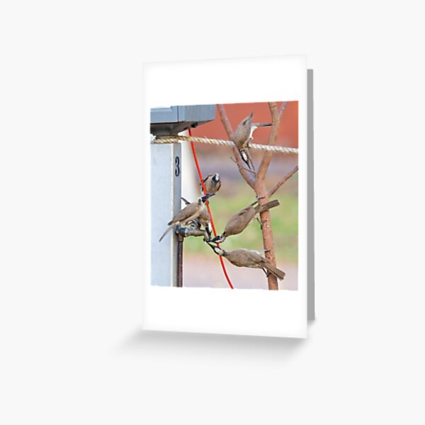 NT ~ FRIARBIRD ~ Silver-crowned Friarbird by David Irwin 131019 Greeting Card