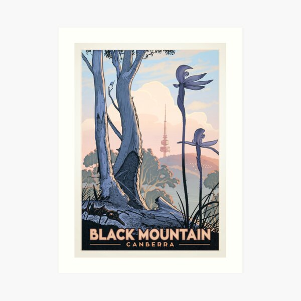 Black Mountain Nature Reserve (ants and orchids) Art Print