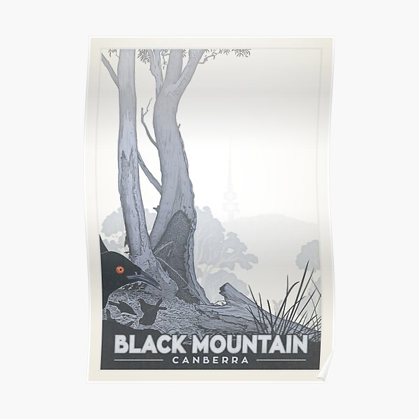 Black Mountain Nature Reserve (white-winged choughs) Poster