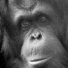 """Pensive Primate"" - orangutan portrait by ArtThatSmiles"
