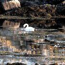 swan by delfinada