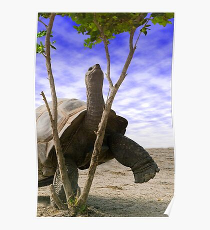 """""""Reaching For The Green"""" - giant tortoise has determination Poster"""