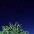 Rami nella notte blu cobalto  by Andrea Rapisarda