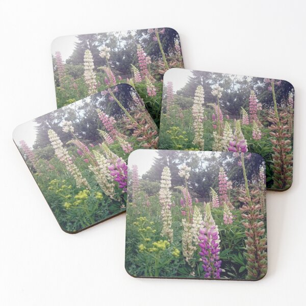 lupins Coasters (Set of 4)
