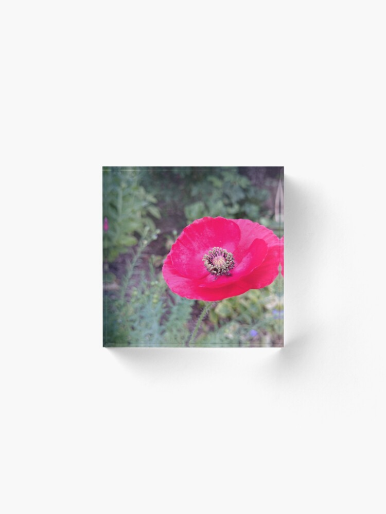 Alternative Ansicht von Roter Seidenmohn Acrylblock