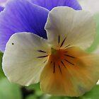 Viola by ElsT