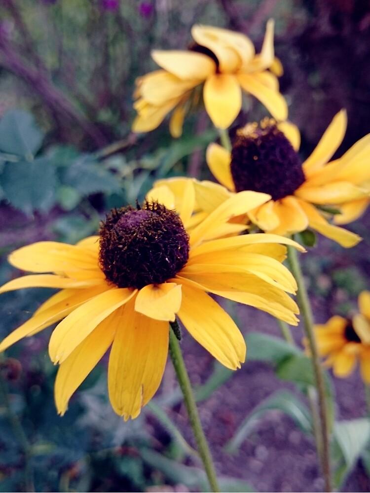 Gelber Sonnenhut von Gourmetkater