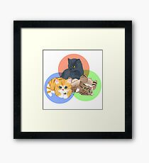 Kitten Trio Framed Print