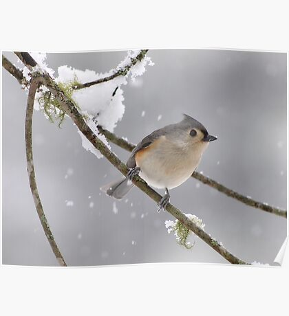 catching snowflakes Poster
