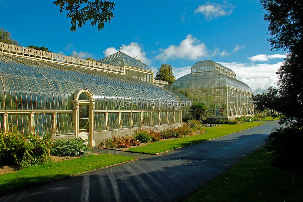 Botanic House by Martina Fagan