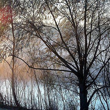 Morning Glow by bgaynor