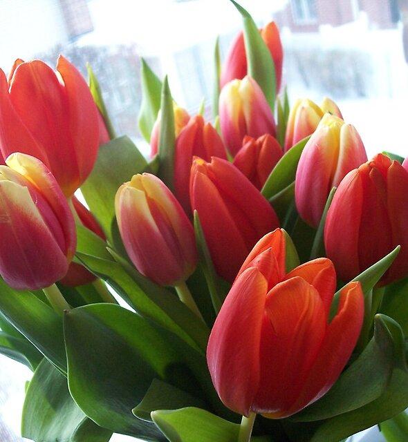 Birthday wishes by Nella Khanis