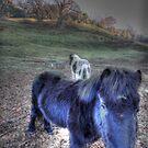 Field Of Horses by Joe Freemantle