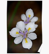 Playful Dietes Poster