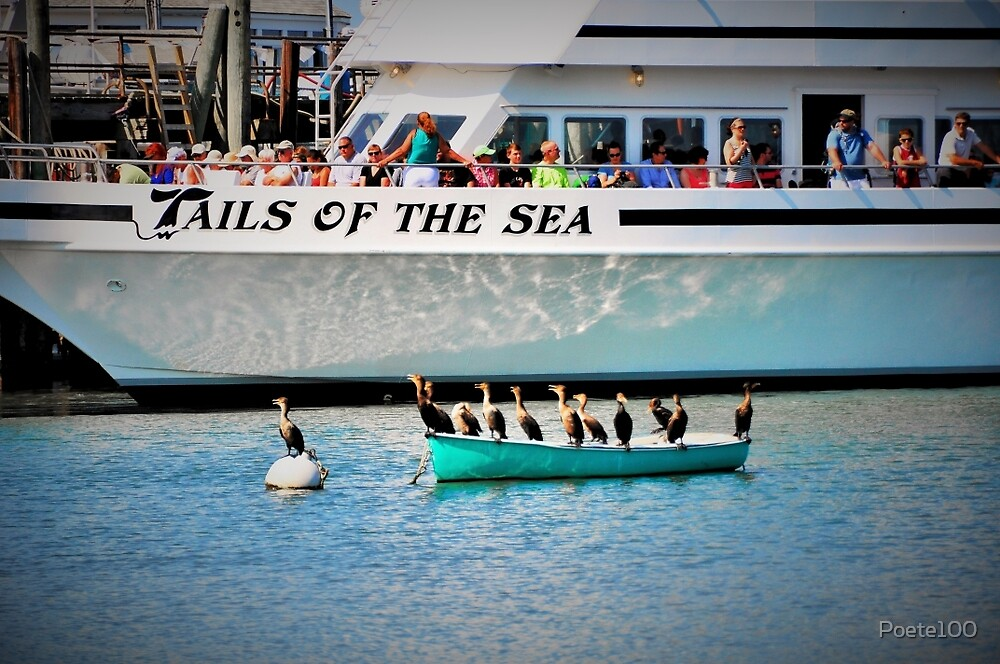 Tails Of The Sea - Whale Watch ready to leave... by Poete100
