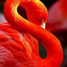 Flamingo von Marianna Tankelevich