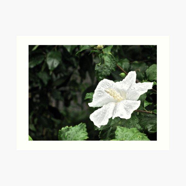 ROSE OF SHARON - BLESSED RAIN! Art Print