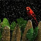 Male Cardinal Stare (snow effect) by RockyWalley